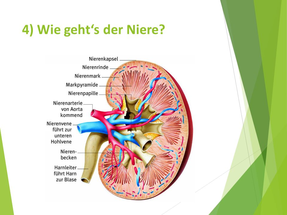 4) Wie geht's der Niere