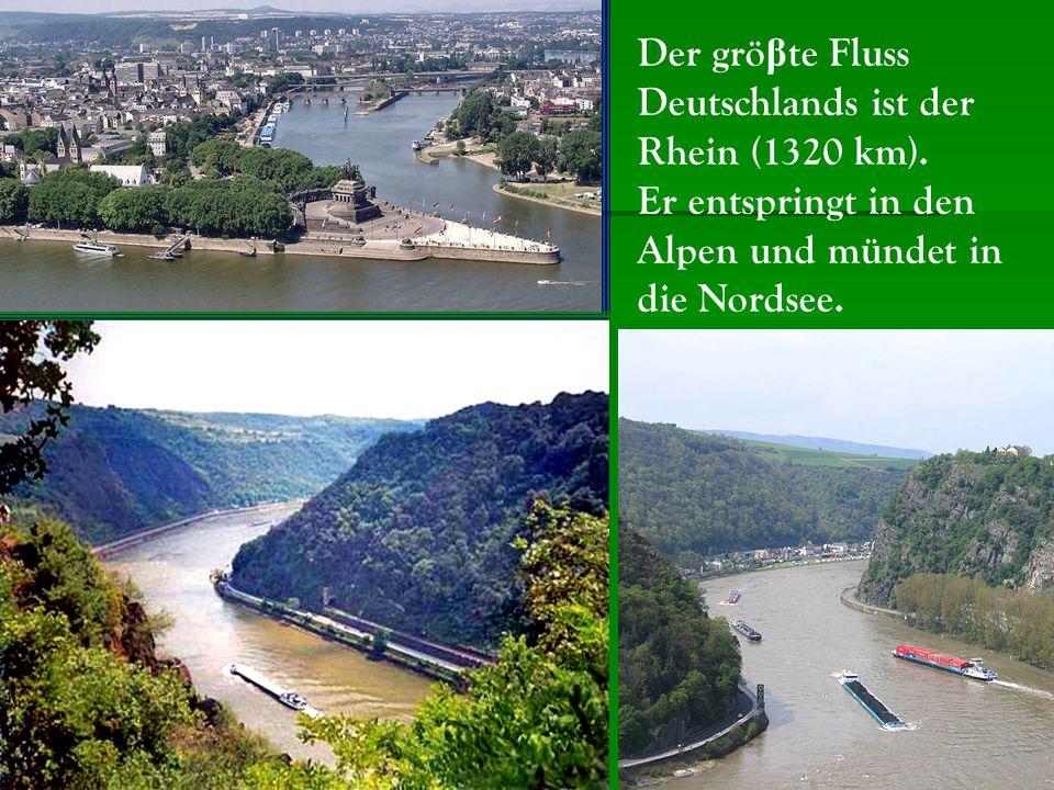 Der gröβte Fluss Deutschlands ist der Rhein (1320 km).