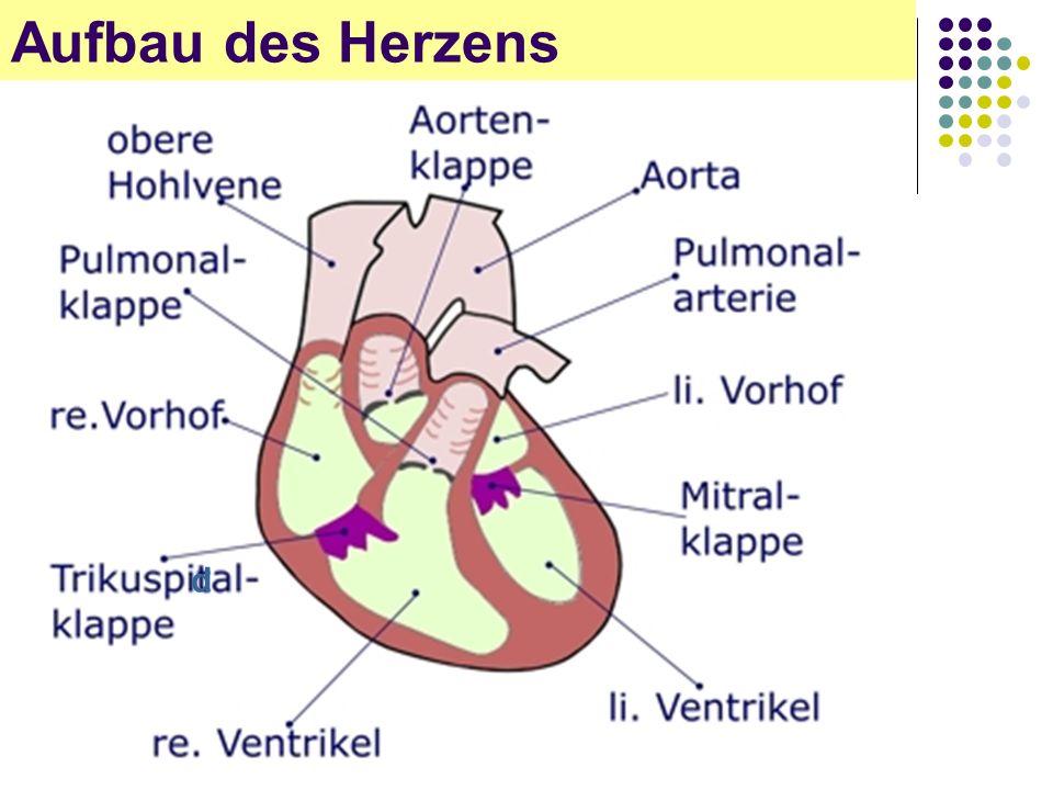Großzügig Anatomie Des Menschlichen Herzens Ppt Zeitgenössisch ...