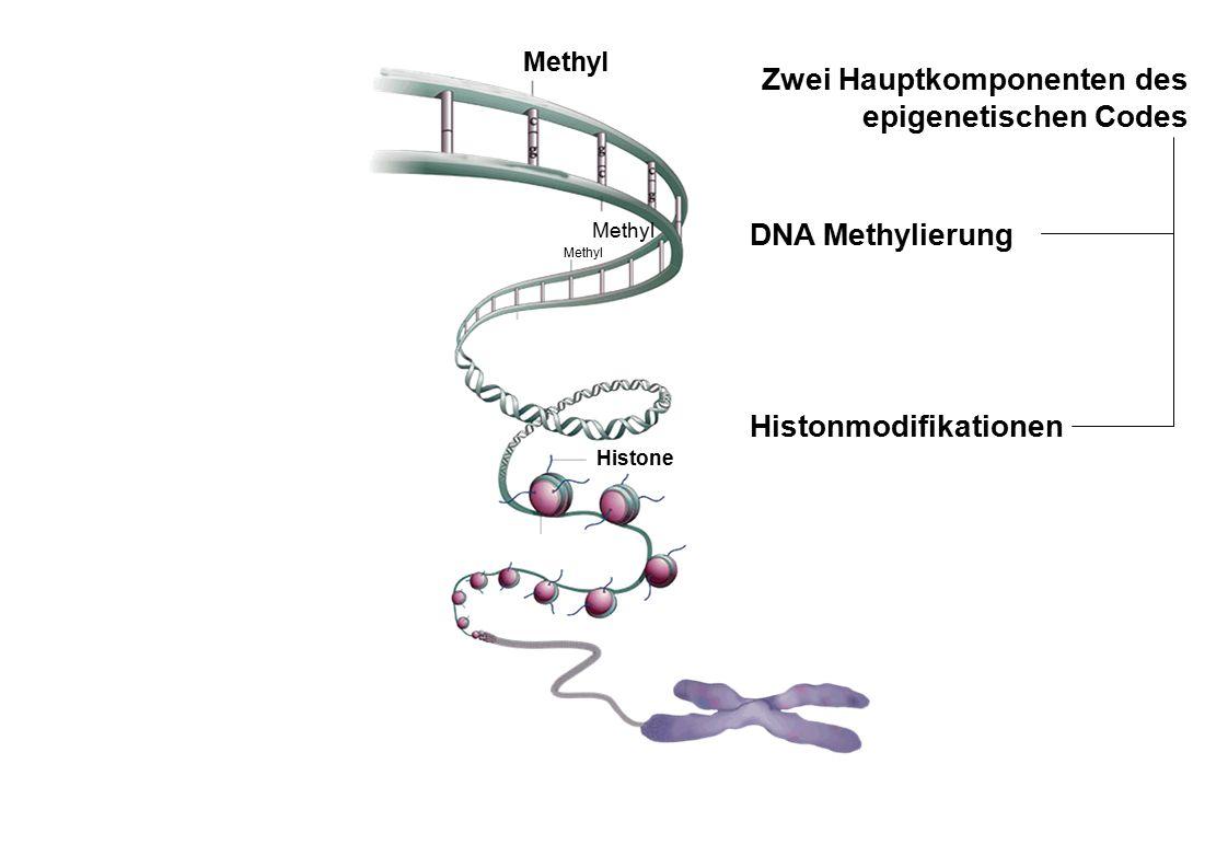 Zwei Hauptkomponenten des epigenetischen Codes