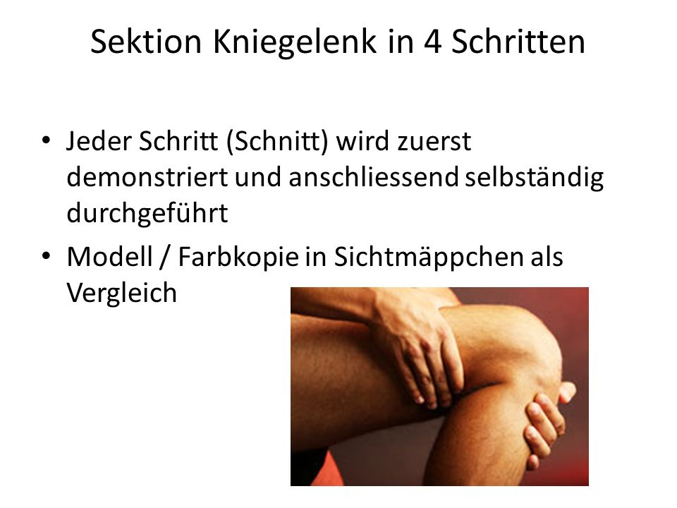 Sektion Kniegelenk in 4 Schritten