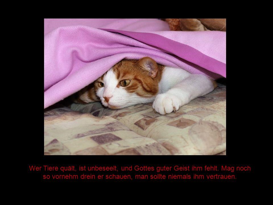 Wer Tiere quält, ist unbeseelt, und Gottes guter Geist ihm fehlt
