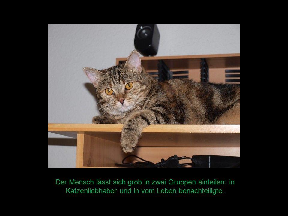 Der Mensch lässt sich grob in zwei Gruppen einteilen: in Katzenliebhaber und in vom Leben benachteiligte.