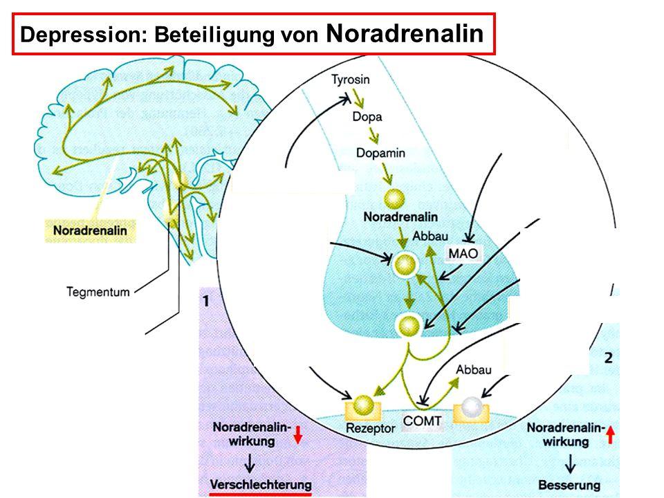 Depression: Beteiligung von Noradrenalin