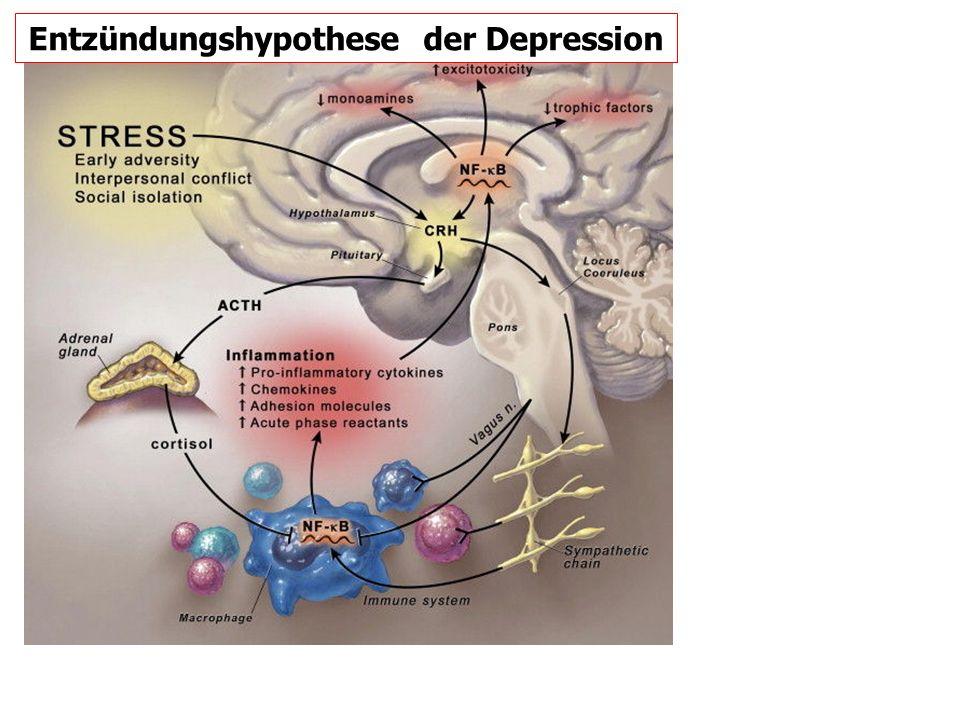 Entzündungshypothese der Depression