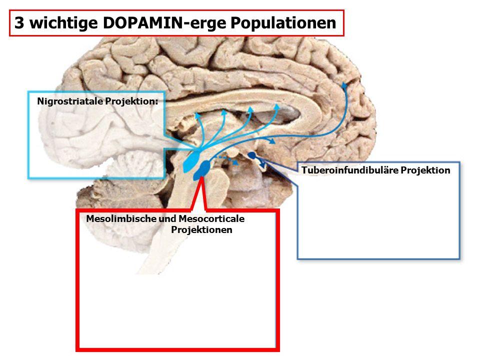 3 wichtige DOPAMIN-erge Populationen