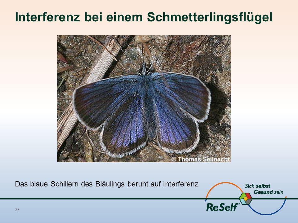 Interferenz bei einem Schmetterlingsflügel