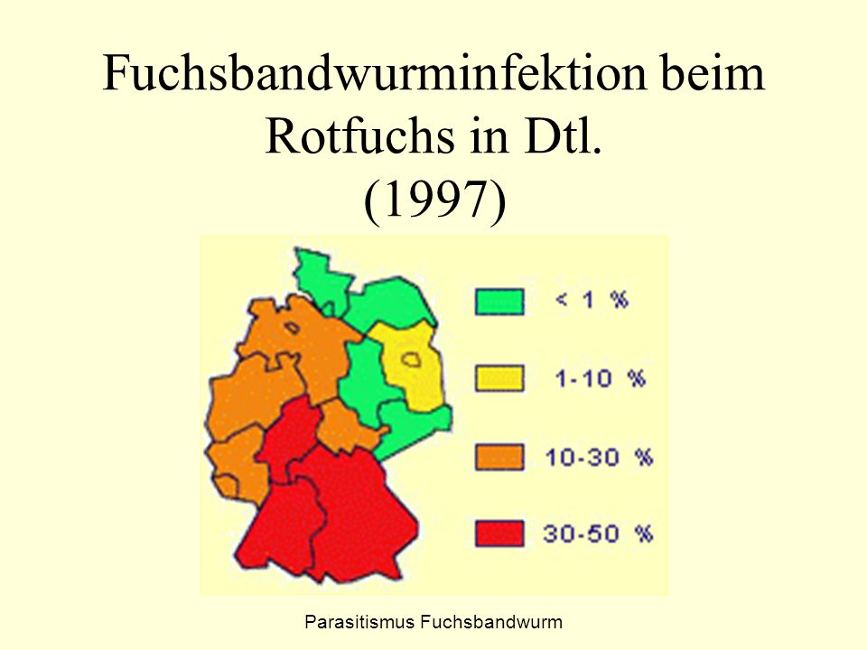 Fuchsbandwurminfektion beim Rotfuchs in Dtl. (1997)