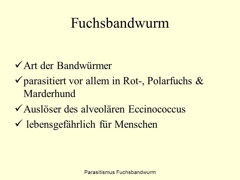 Parasitismus Fuchsbandwurm