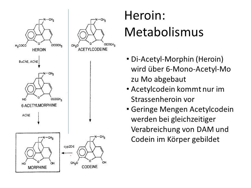 Heroin: Metabolismus Di-Acetyl-Morphin (Heroin) wird über 6-Mono-Acetyl-Mo zu Mo abgebaut. Acetylcodein kommt nur im Strassenheroin vor.