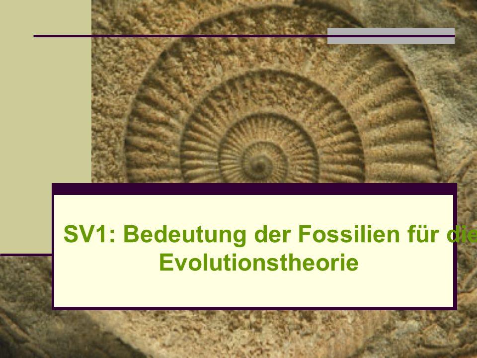SV1: Bedeutung der Fossilien für die Evolutionstheorie