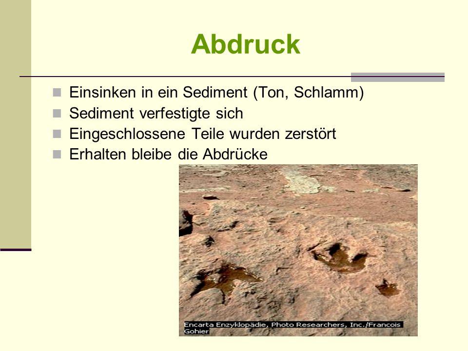 Abdruck Einsinken in ein Sediment (Ton, Schlamm)
