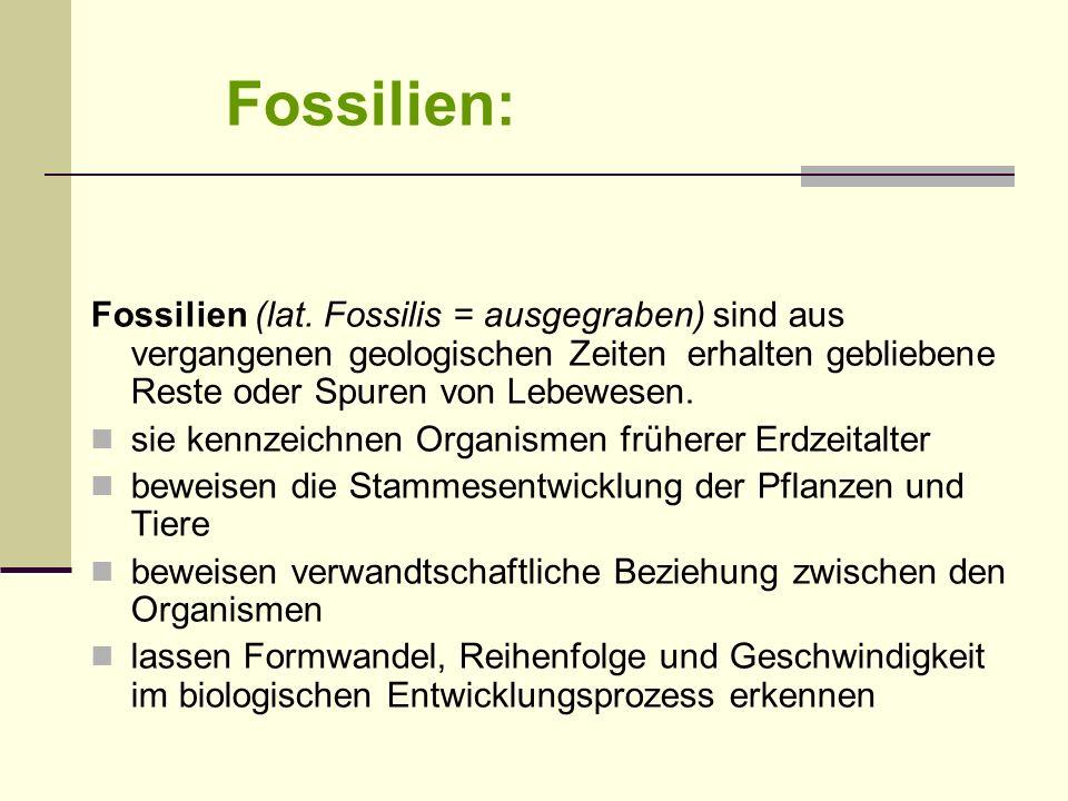 Fossilien: Fossilien (lat. Fossilis = ausgegraben) sind aus vergangenen geologischen Zeiten erhalten gebliebene Reste oder Spuren von Lebewesen.