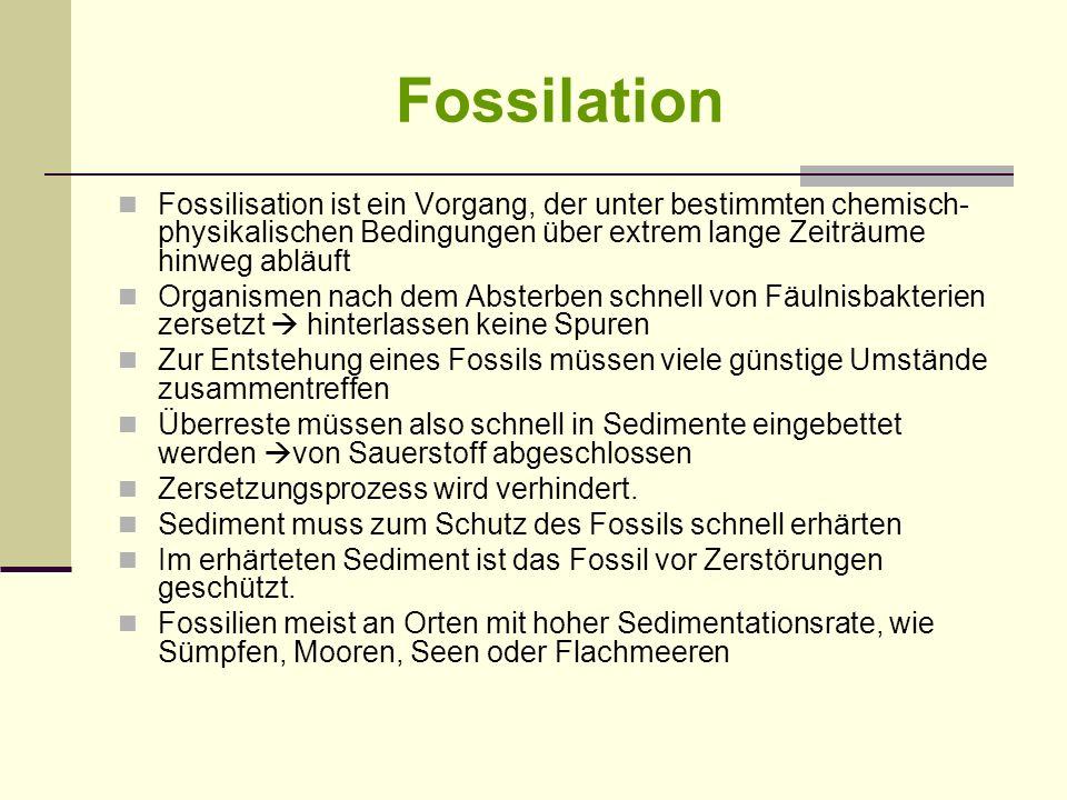 Fossilation Fossilisation ist ein Vorgang, der unter bestimmten chemisch-physikalischen Bedingungen über extrem lange Zeiträume hinweg abläuft.