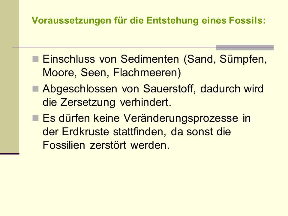 Voraussetzungen für die Entstehung eines Fossils: