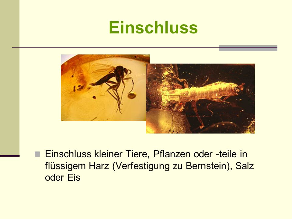 Einschluss Einschluss kleiner Tiere, Pflanzen oder -teile in flüssigem Harz (Verfestigung zu Bernstein), Salz oder Eis.