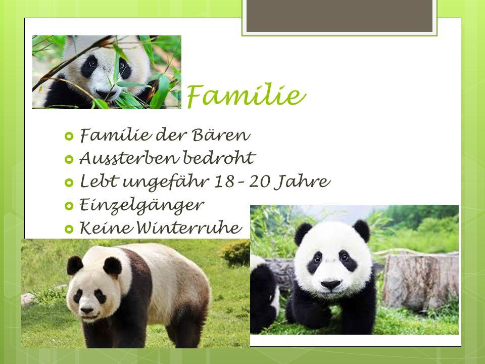 Familie Familie der Bären Aussterben bedroht