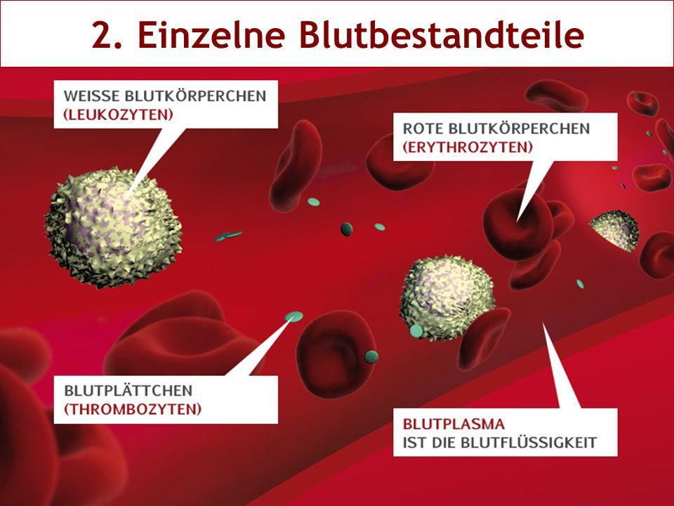 2. Einzelne Blutbestandteile