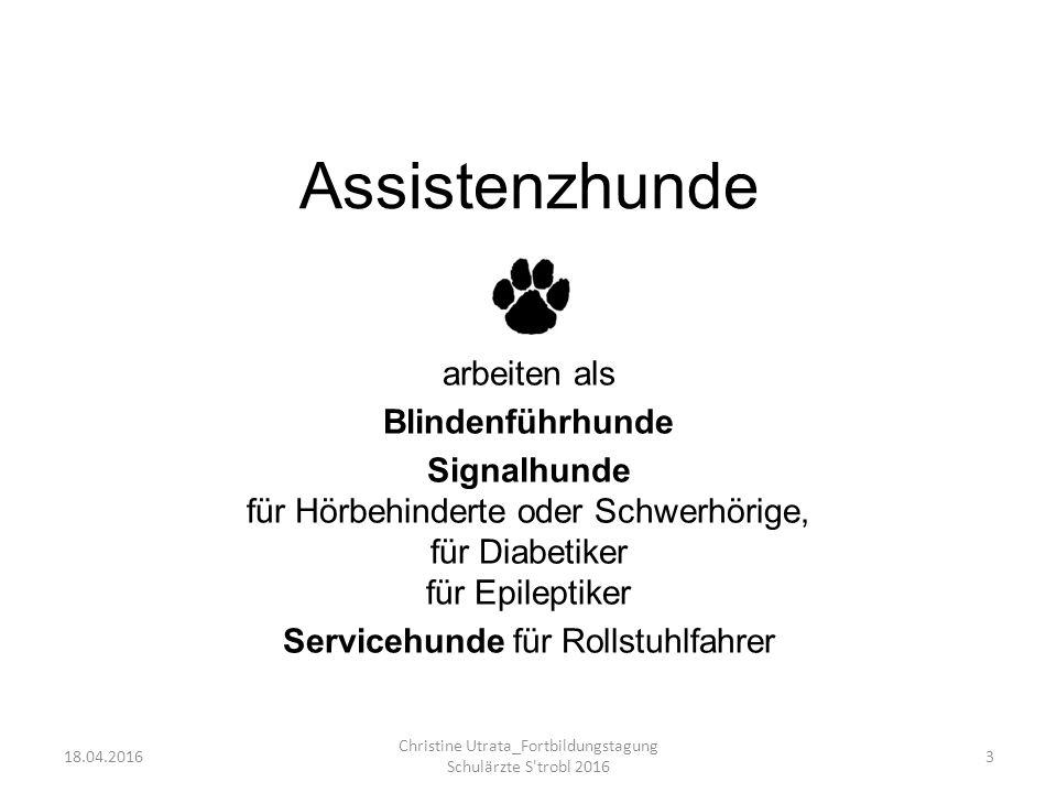 Assistenzhunde arbeiten als Blindenführhunde