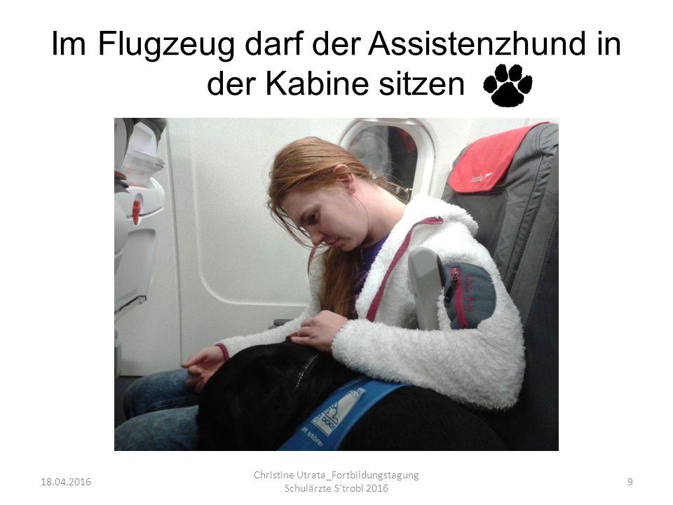 Im Flugzeug darf der Assistenzhund in der Kabine sitzen