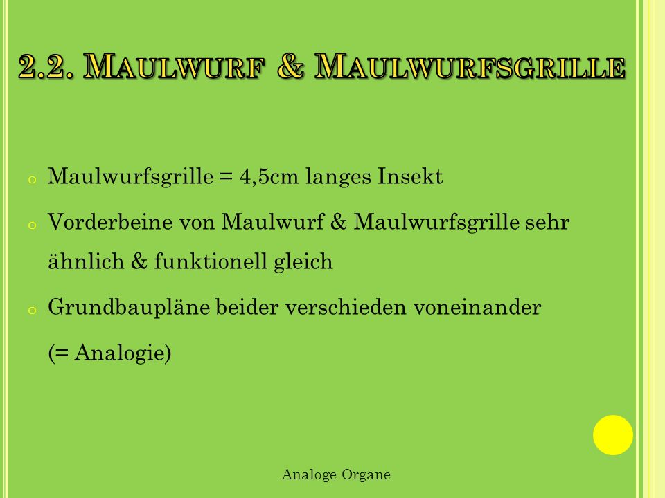 2.2. Maulwurf & Maulwurfsgrille