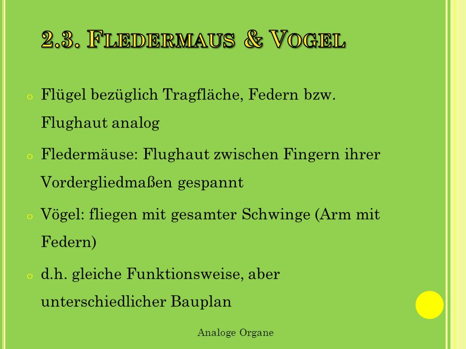 2.3. Fledermaus & Vogel Flügel bezüglich Tragfläche, Federn bzw. Flughaut analog.