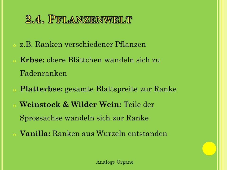 2.4. Pflanzenwelt z.B. Ranken verschiedener Pflanzen