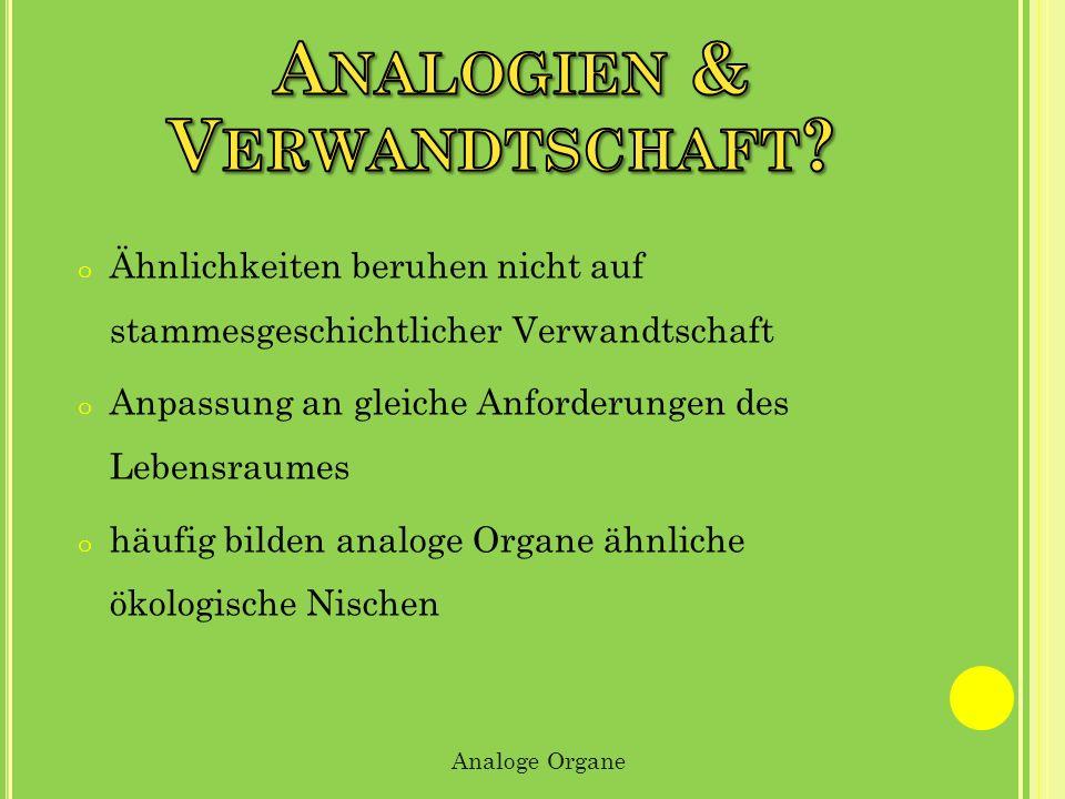 Analogien & Verwandtschaft