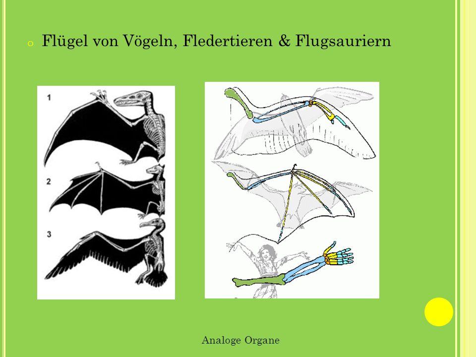 Flügel von Vögeln, Fledertieren & Flugsauriern