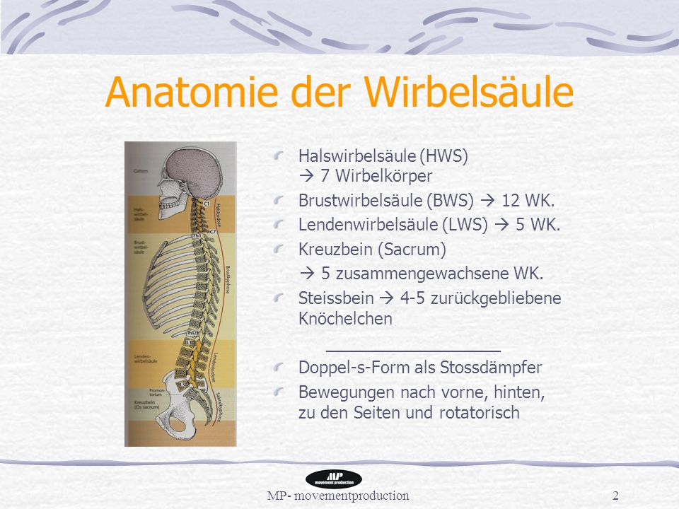 Schön Steißbein Und Sacrum Anatomie Fotos - Anatomie Ideen - finotti ...