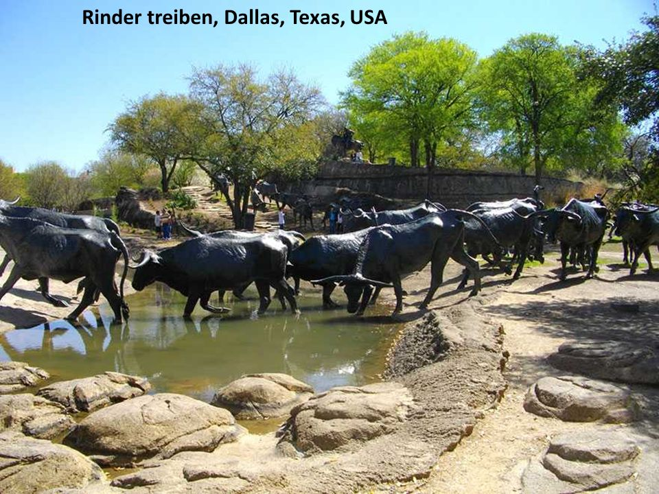 Rinder treiben, Dallas, Texas, USA