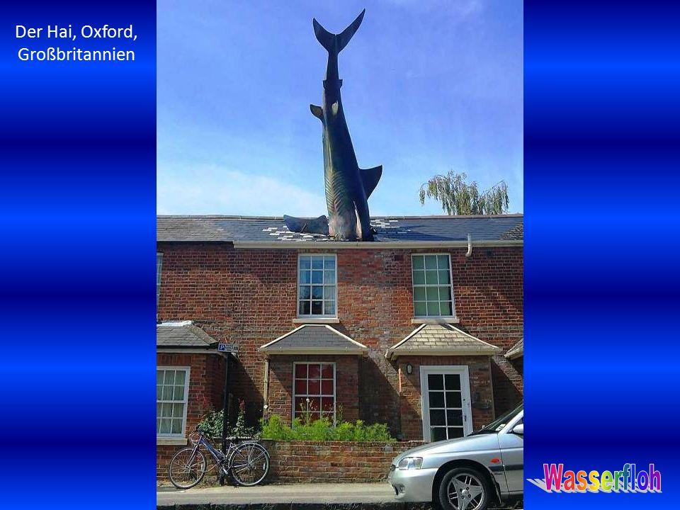 Der Hai, Oxford, Großbritannien