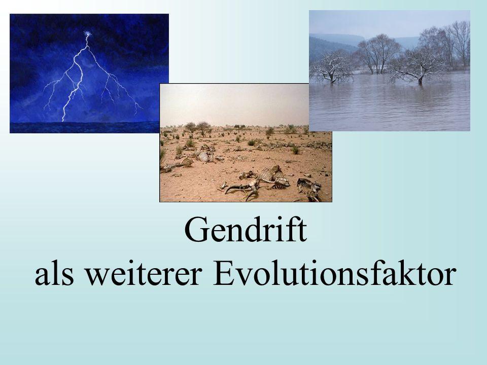 Gendrift als weiterer Evolutionsfaktor