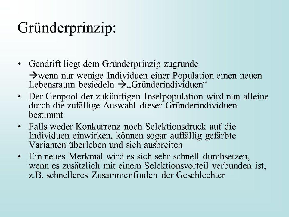 Gründerprinzip: Gendrift liegt dem Gründerprinzip zugrunde