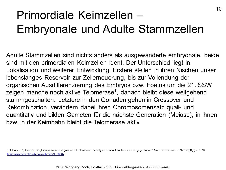 Primordiale Keimzellen – Embryonale und Adulte Stammzellen