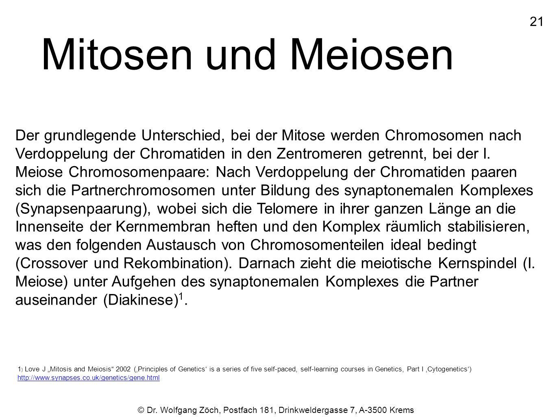 21 Mitosen und Meiosen.