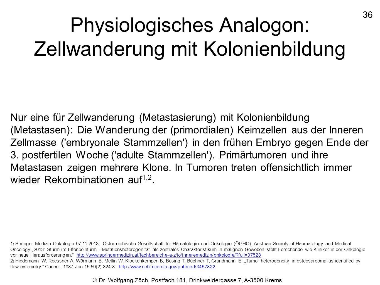 Physiologisches Analogon: Zellwanderung mit Kolonienbildung