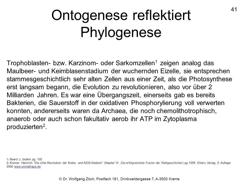 Ontogenese reflektiert Phylogenese