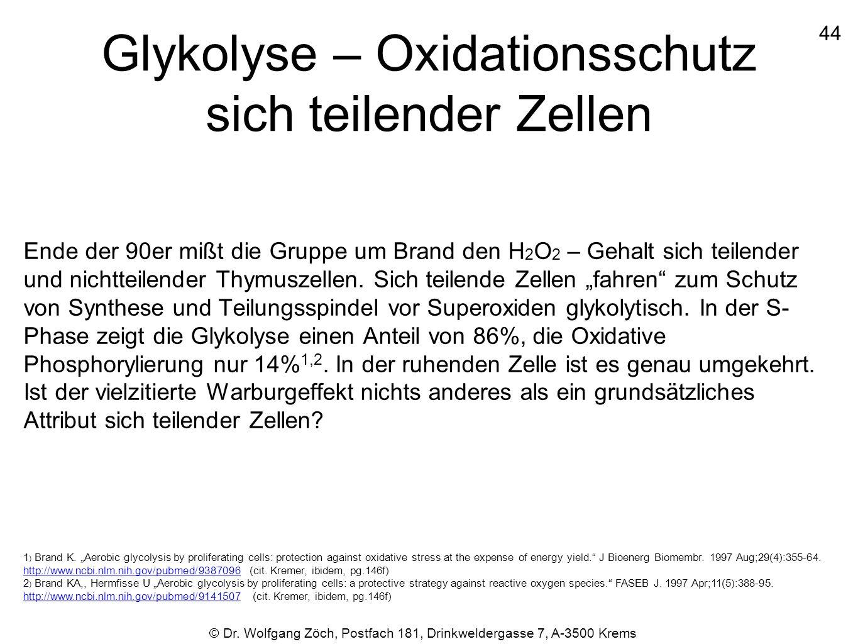 Glykolyse – Oxidationsschutz sich teilender Zellen