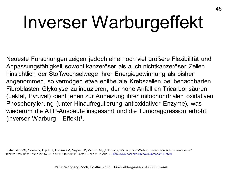 Inverser Warburgeffekt