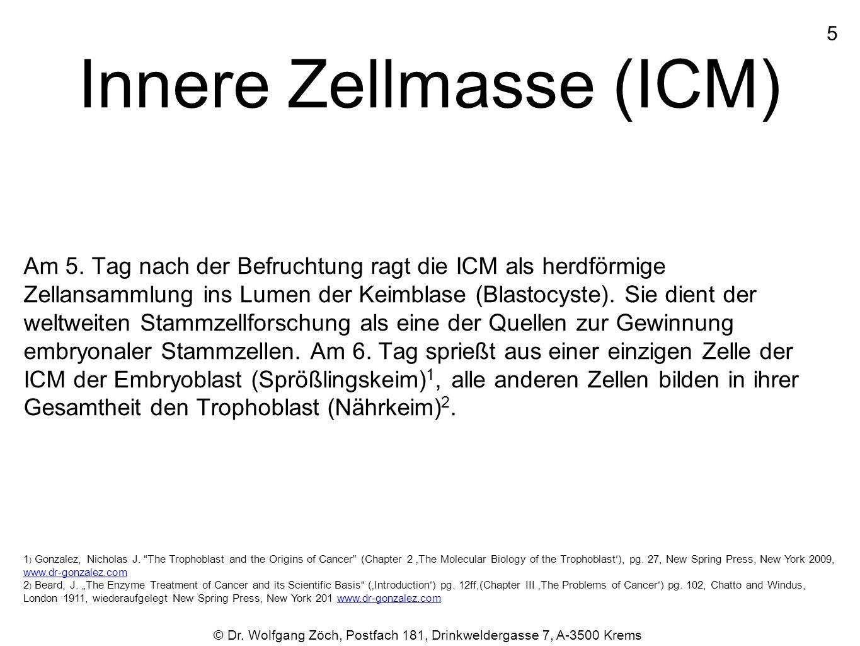 Innere Zellmasse (ICM)