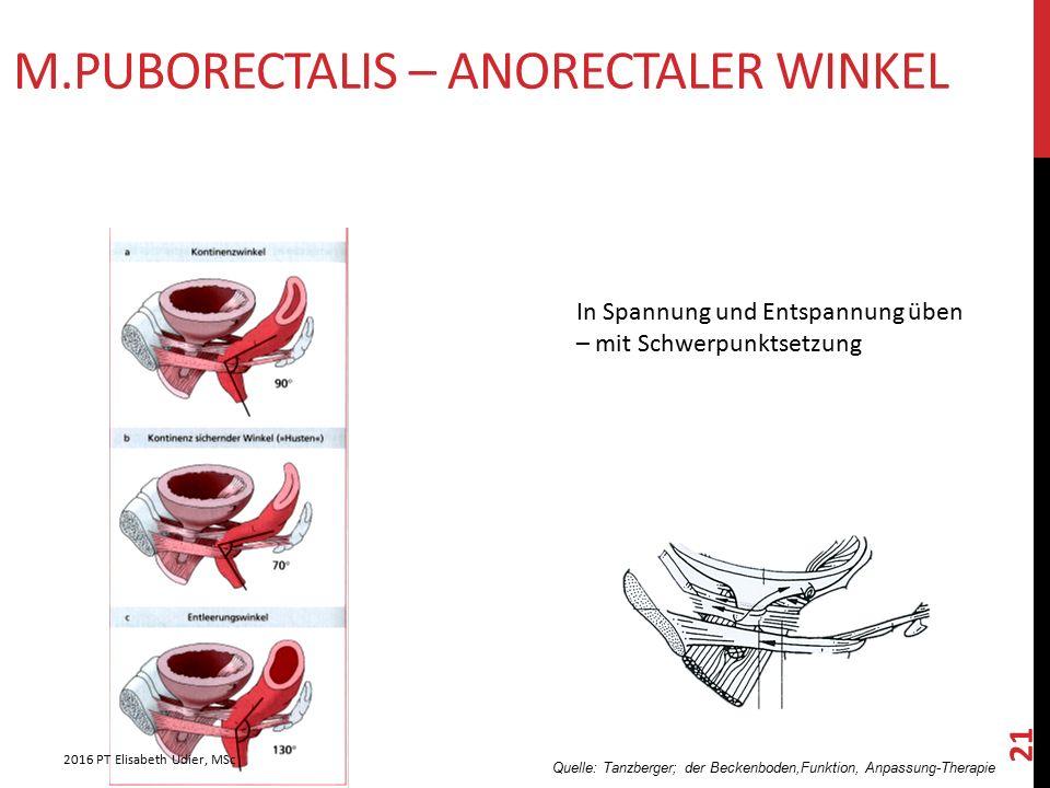 M.Puborectalis – anorectaler Winkel