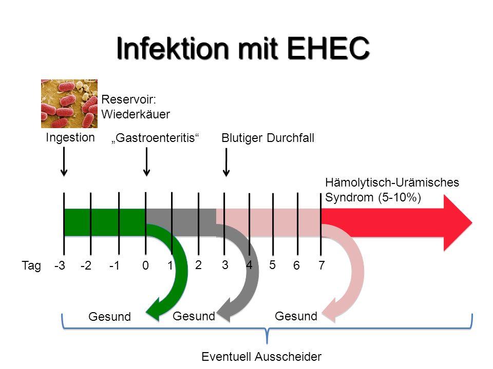 """Infektion mit EHEC Reservoir: Wiederkäuer Ingestion """"Gastroenteritis"""