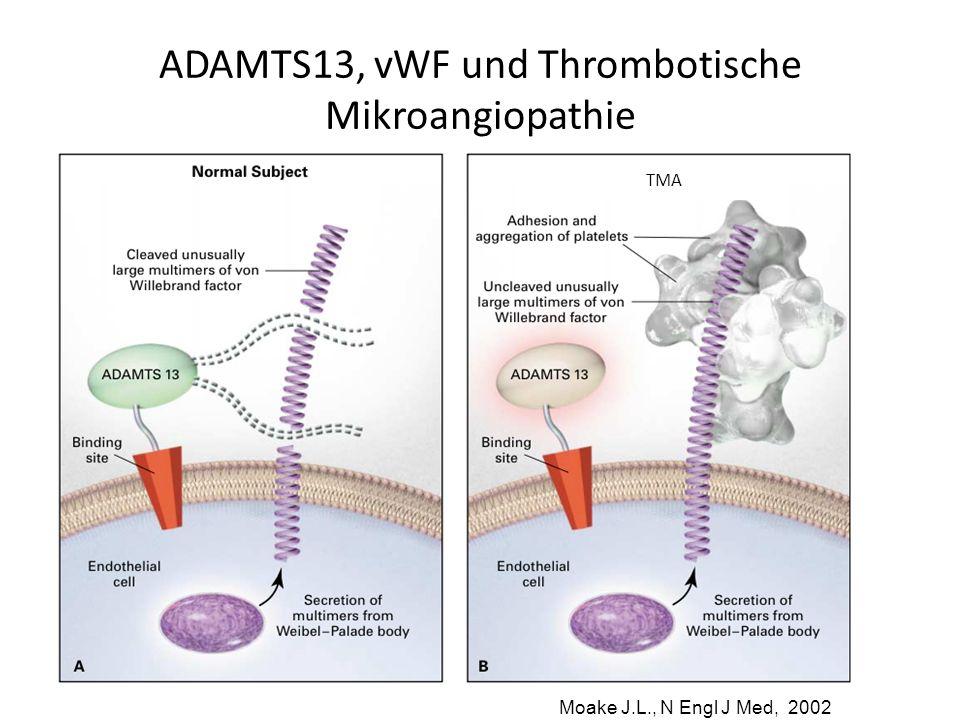 ADAMTS13, vWF und Thrombotische Mikroangiopathie