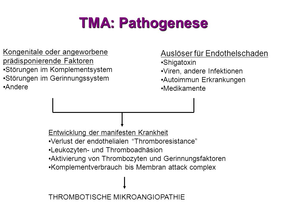 TMA: Pathogenese Auslöser für Endothelschaden