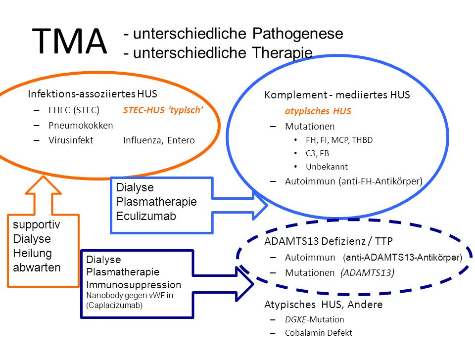 TMA - unterschiedliche Pathogenese - unterschiedliche Therapie