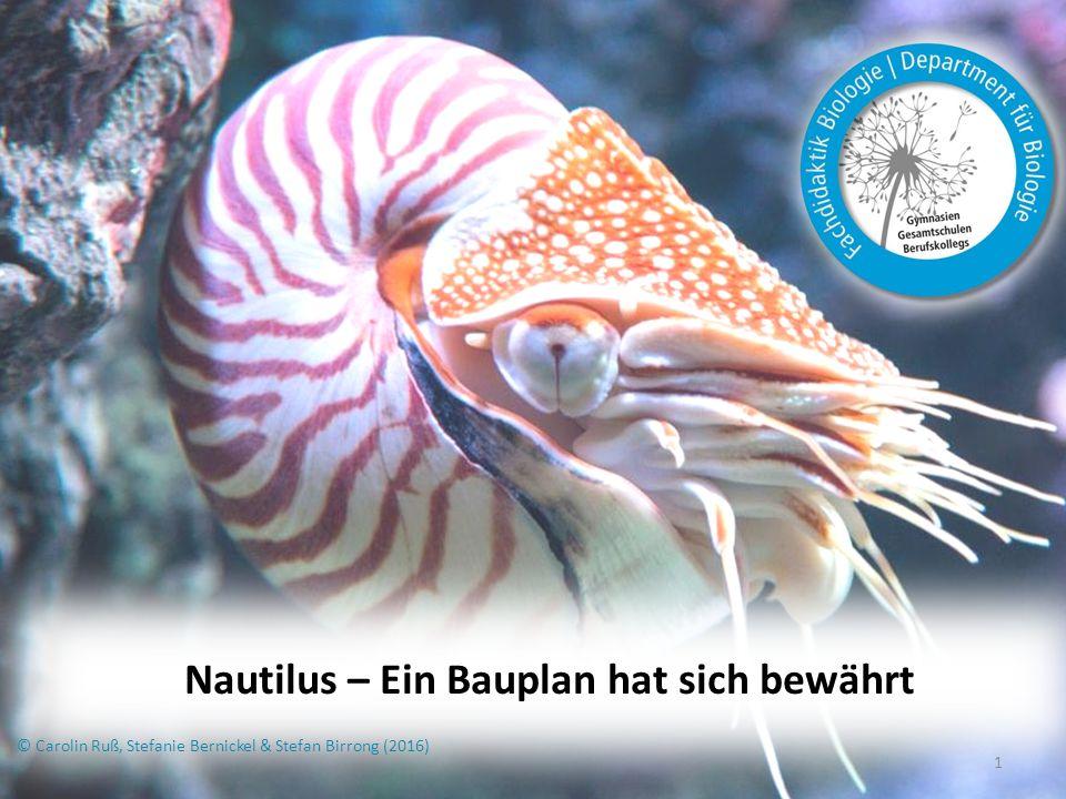 Nautilus – Ein Bauplan hat sich bewährt