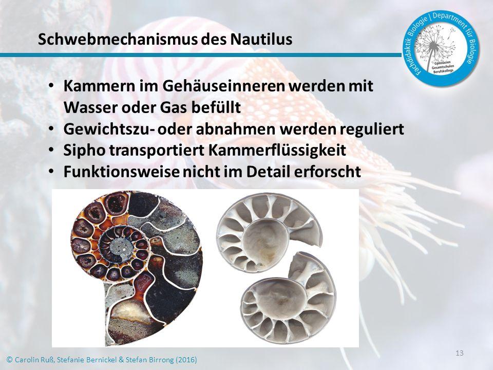 Schwebmechanismus des Nautilus