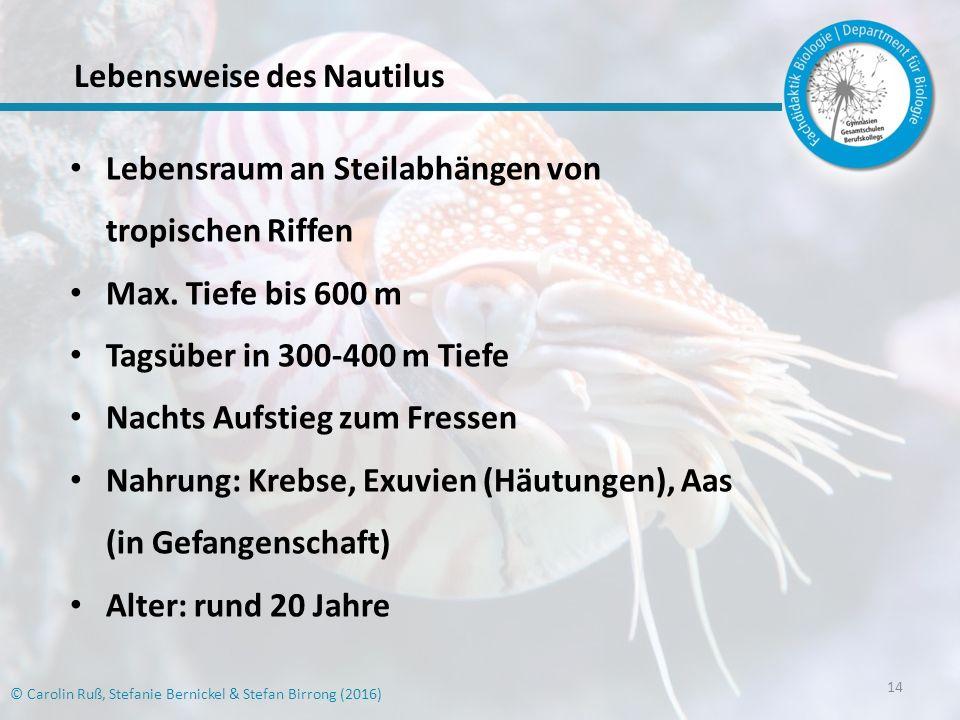Lebensweise des Nautilus