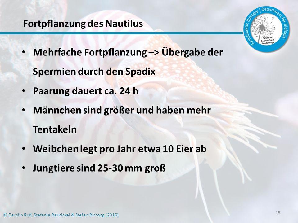 Fortpflanzung des Nautilus